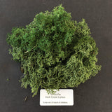 Dark Green Lichen - Foliage, Moss & Undergrowth