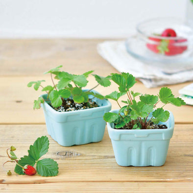 Berry Happy Planter