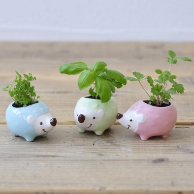 Hedgie Planter