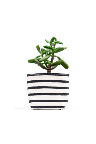 Black Stripe Canvas Planter