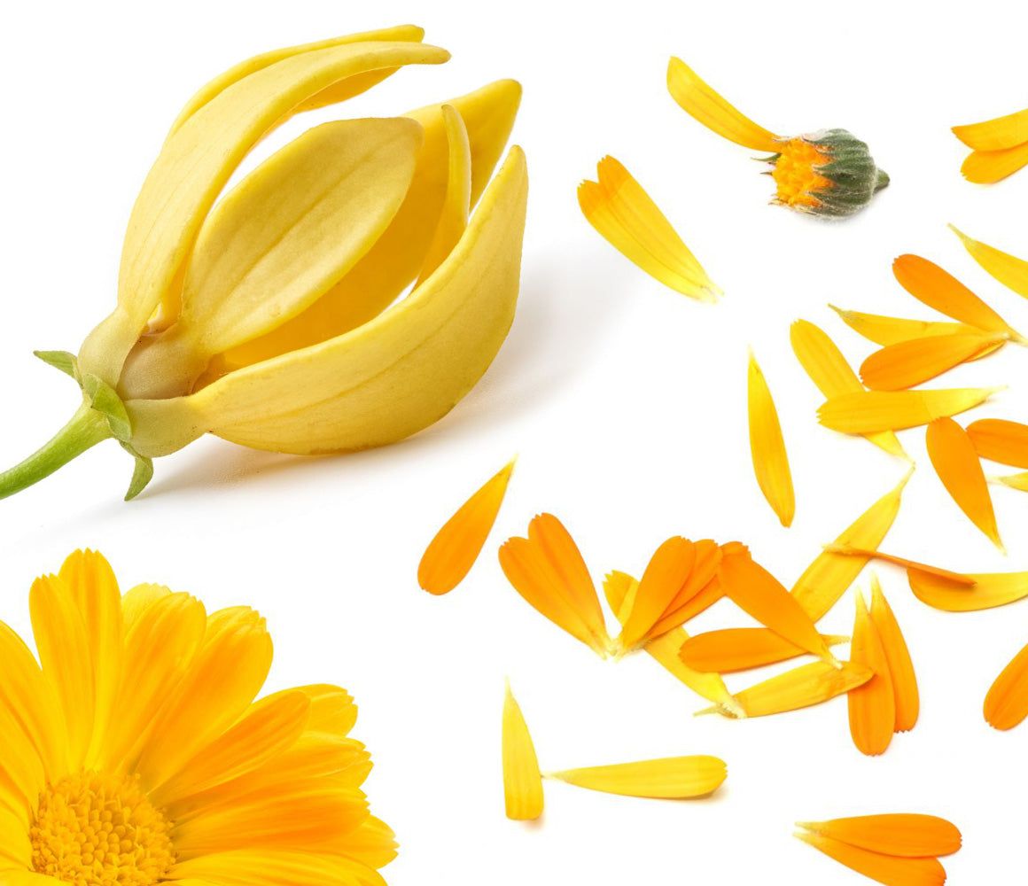 Calendula Petals 