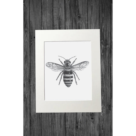 Bee Print from Original Pencil Drawing - Cathy Hamilton Artworks