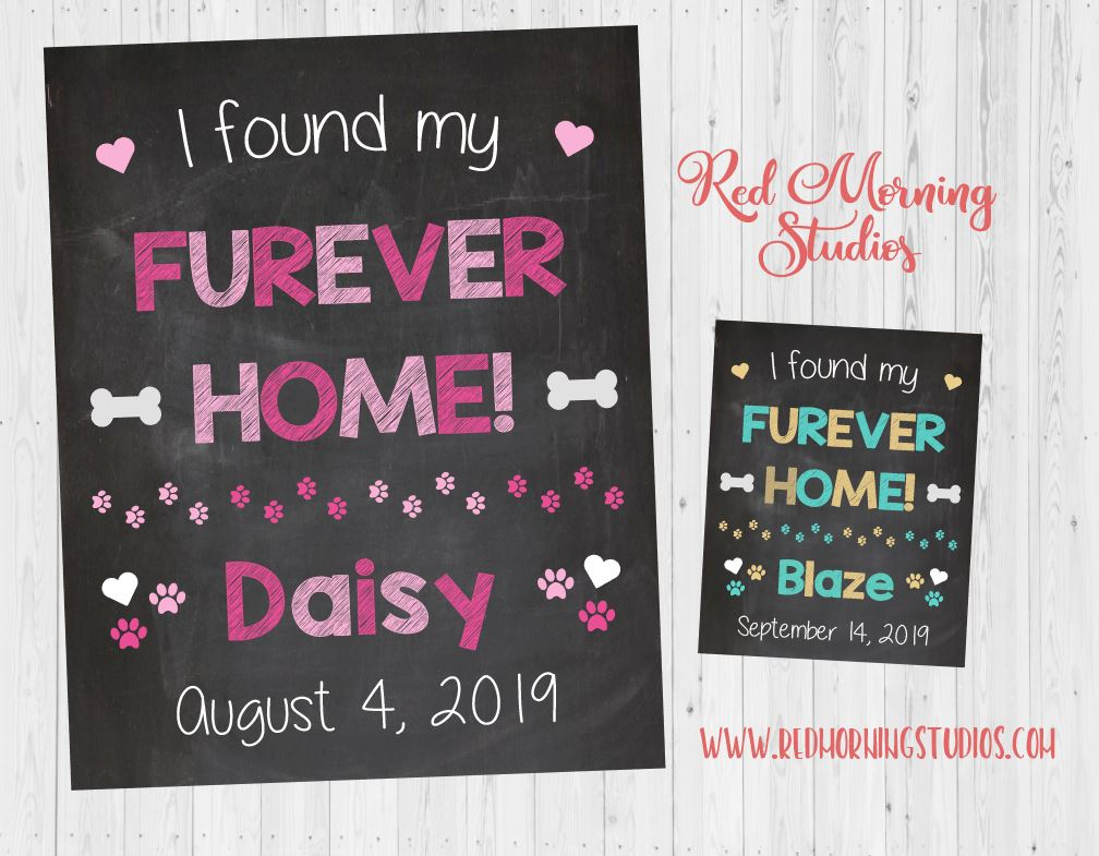 Girl Pet Adoption sign. Pink dog adoption announcement poster. I found my furever home. Female dog adoption photo prop.