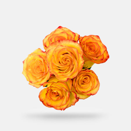 1 Half Dozen Rose Bouquet - Orange