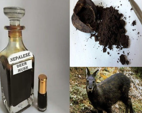 Authentic (Wild Nepalese Kasturi) Real Black Deer Musk Pheromones Attar Oil 3ML+More!