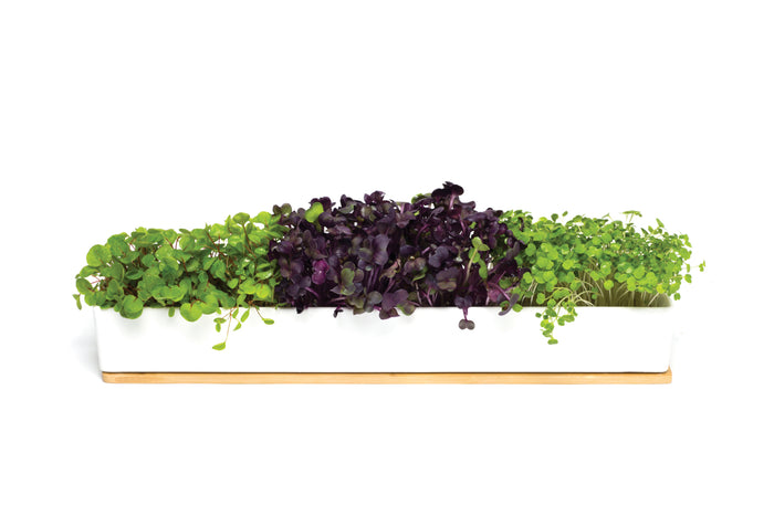 Urban Greens Micro Greens Windowsill Box Kit