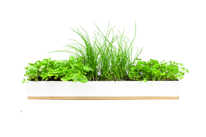 Urban Greens Micro Herbs Windowsill Box Kit