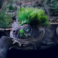 Adopt Ugly ❤ Mary River Turtle