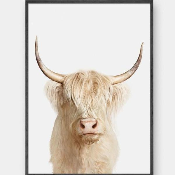 NEUTRAL Tone Highland Cow
