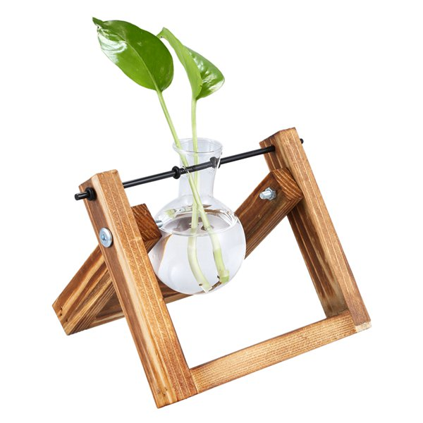 TRENDY Glass and Wood Terrarium