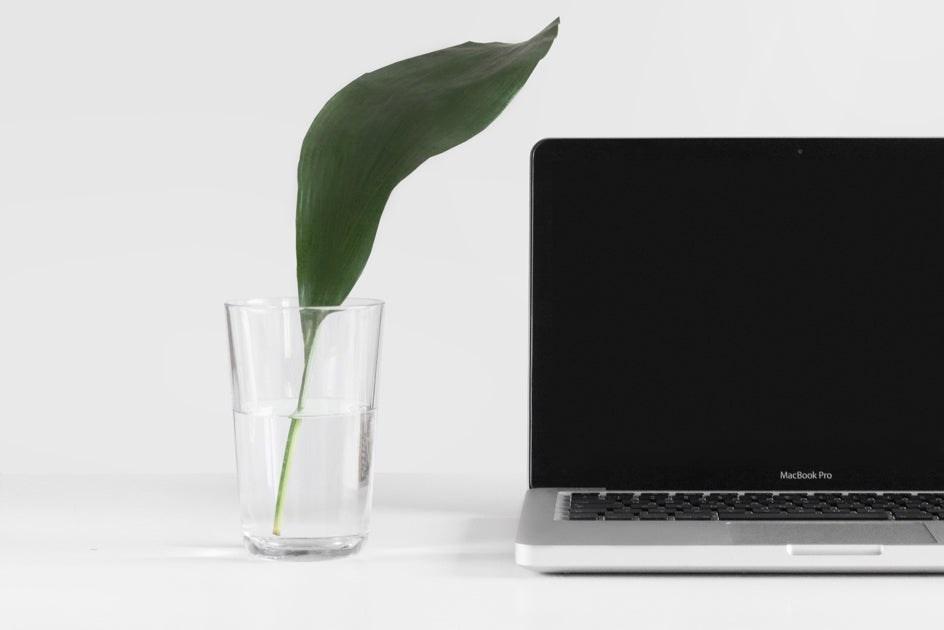 Laptop and plant