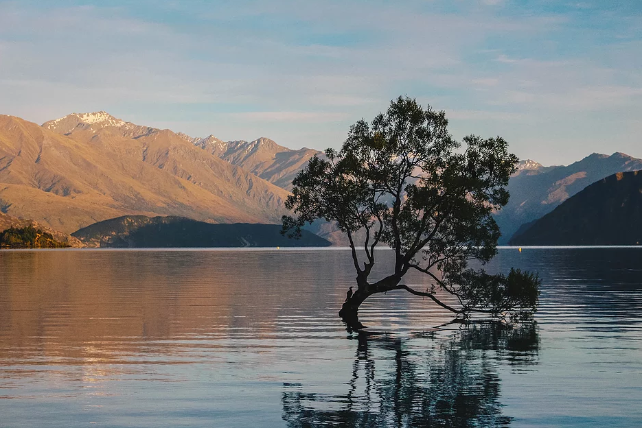 Lone Tree Of Lake Wanaka New Zealand Lovetheworld