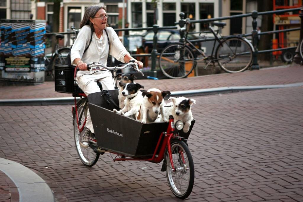 riding with dogs - Surprising Reasons Why the Dutch Love Cycling So Hard
