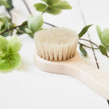 Maple Wood Face Brush
