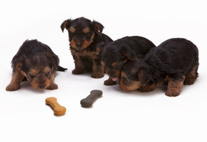 4 puppies eating bone shape dog biscuit