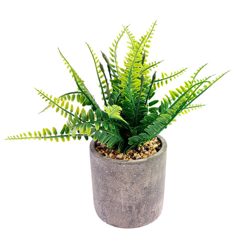 The Greenery Artificial Succulent Fern Pot Plant
