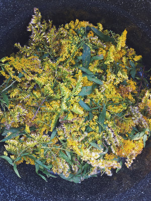 GOLDENROD: from field to flower