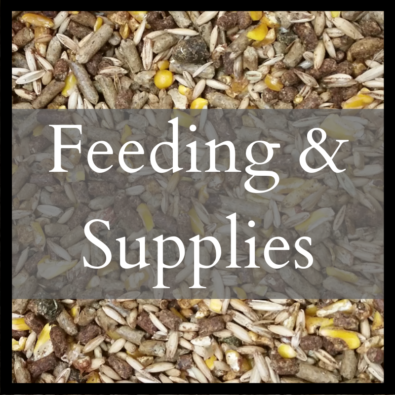Feeding & Supplies
