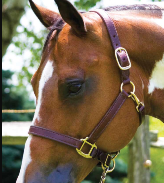 "1"" Leather Halter w/ Snaps and Adj. Nose Havanna"