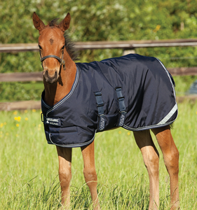 "Amigo 54"" Foal Midweight Turn-out Blanket, Navy"