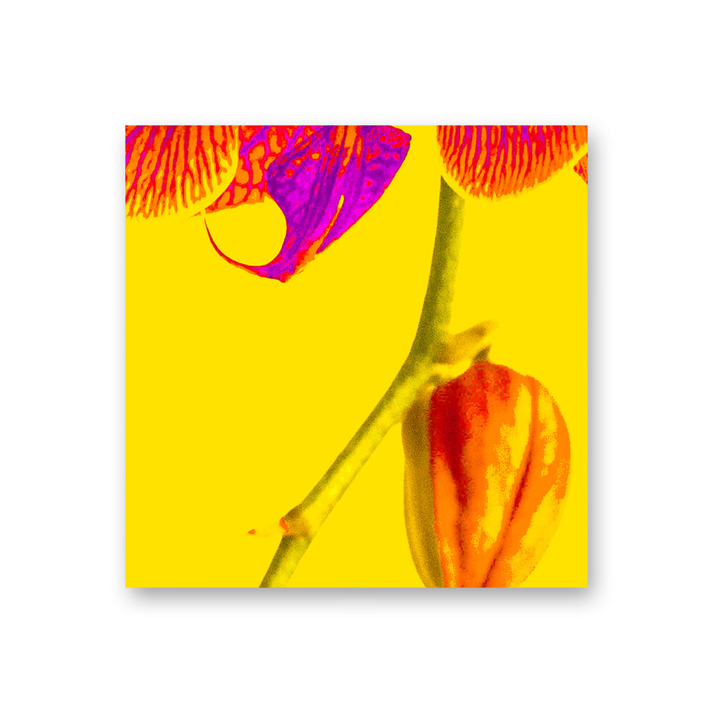 Orchid Yellow Hardboard Coaster