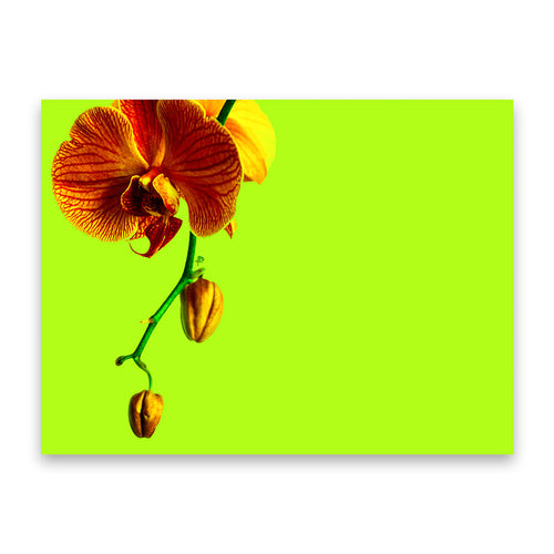 Orchid Lime Hardboard Placemat - bettibdesign