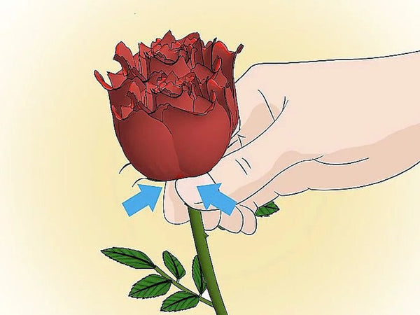 How To Keep Your Roses Fresh