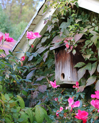 weathered birdhouse with pink roses