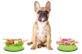 Feeding your dog for health and vitality