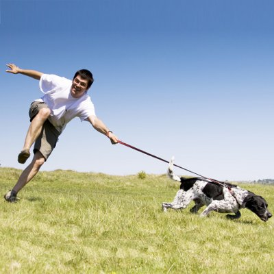 What to do about a 'pulling' dog