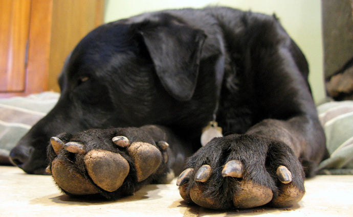 Dog paws: They're not just for walking