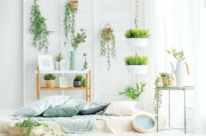 best indoor plants for air purification
