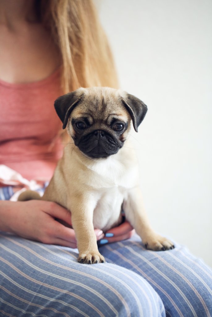 How Having a Pet Can Benefit Your Health