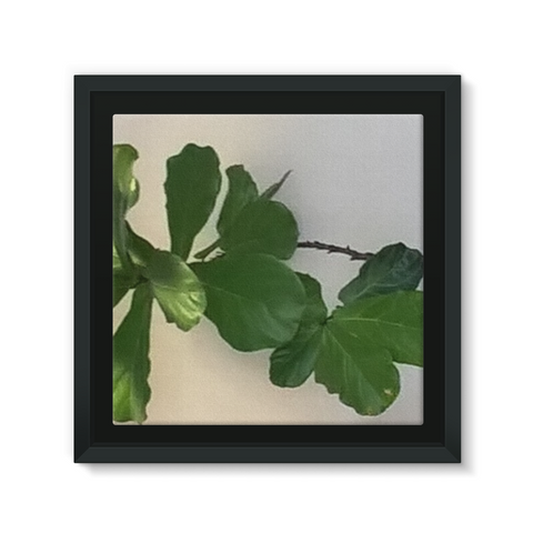 A beautiful green plant design, high quality framed canvas that will look amazing on any wall
