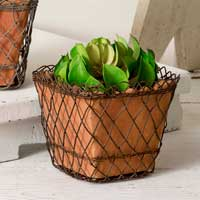 Woven Wire Square Basket with Terra Cotta Pot - FIG TREE ~Treasures for the Heart & Home~™