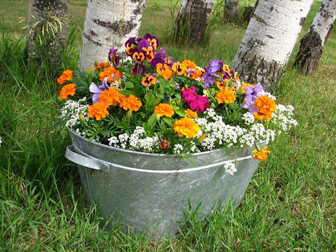 Pansies, marigolds, petunias in galvanized steel tub