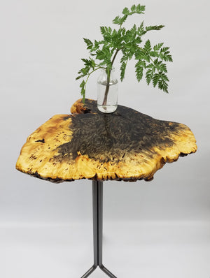 End Table- Side Table- Plant Stand- Buckeye Burl- Tree Slice- Live Edge- Natural Wood- Industrial- Mid Century- Steel- Home- Cool Table
