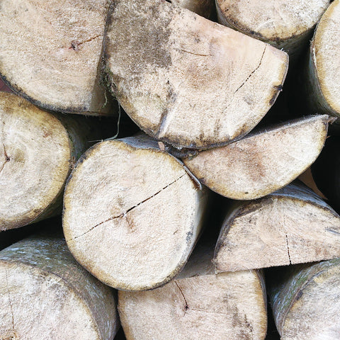 Logs from Albizia tree