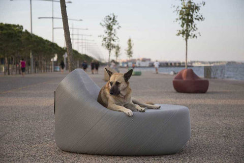 German Shepherd dog sitting on some grey street furniture by the sea