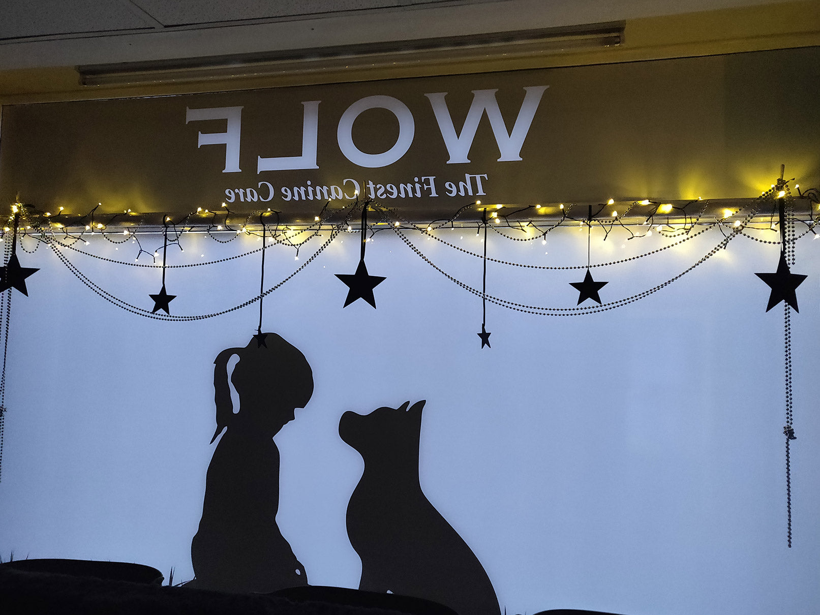window for canine care company, hung with stars
