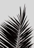 Print | 'Palm Leaf' by Coco Lapine | Black and White