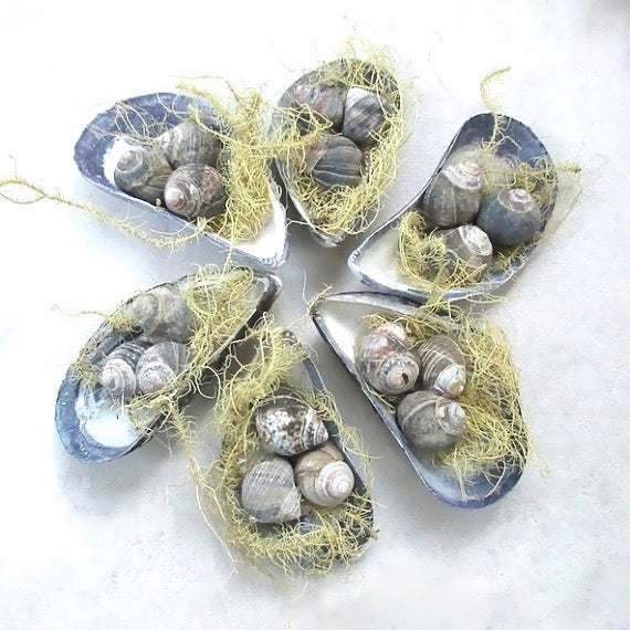 Nesting Shells Beach Cottage Favors Holiday Ornament Set