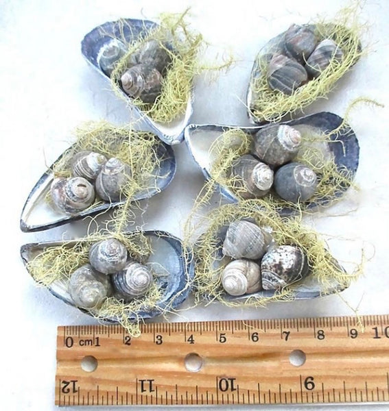 Nesting Shells Beach Cottage Holiday Ornament Set