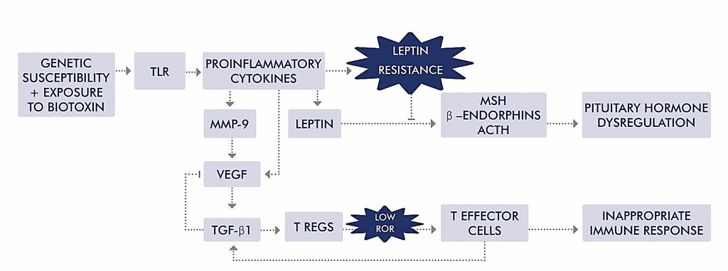 Chronic Inflammatory Response Syndrome (CIRS) Figure 1 | HealthMasters