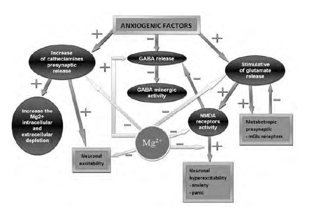 Metagenics CalmX Figure 3: Magnesium's mechanism of action in anxiety and panic