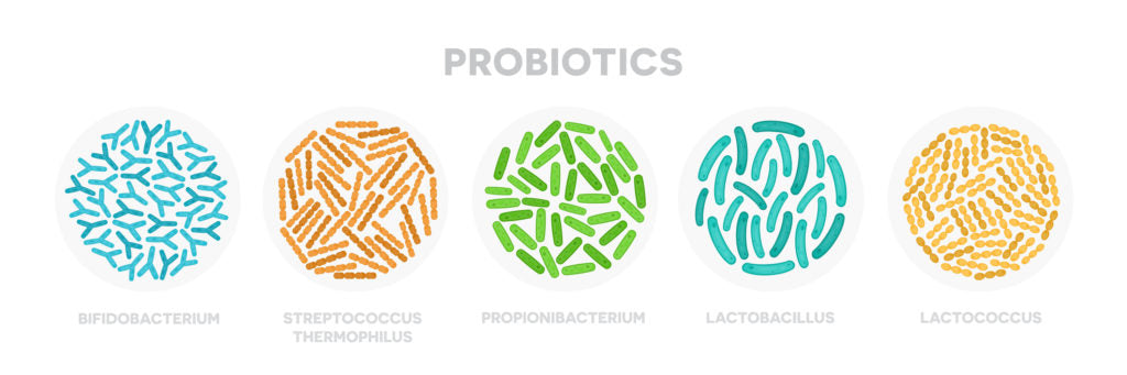 Probiotics diagram | HealthMasters