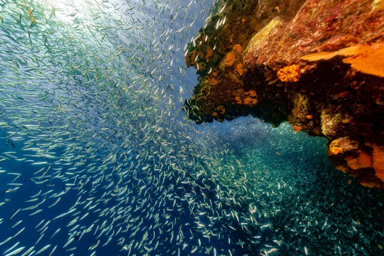 Lots of fish in the sea | HealthMasters