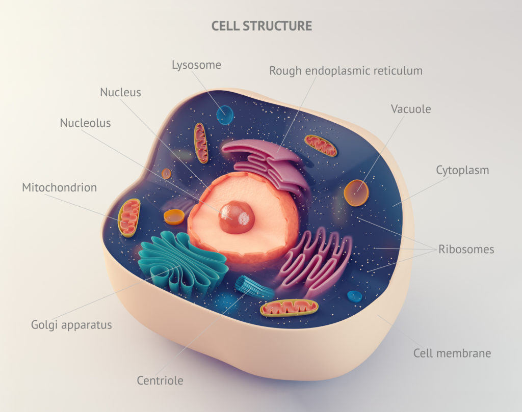 Cell Structure | HealthMasters