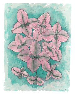NEW Callisia Pink Lady Plant W/ Pink & Green Variegated Leaves - Giclee Art Print- Botanical Collection