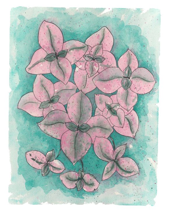NEW Callisia Pink Lady Plant W/ Pink & Green Variegated Leaves -Limited Edition  Giclee Art Print- Botanical Collection